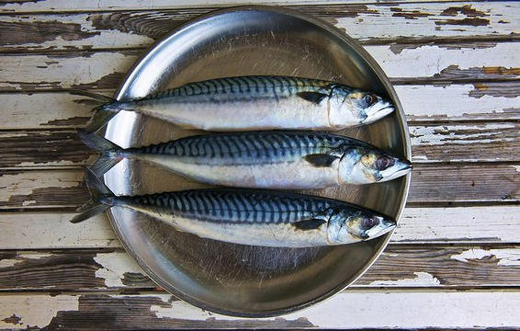 Fish that contains vitamin D